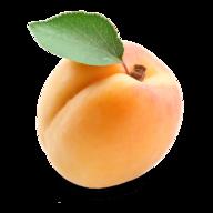 www.opricot.com